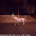 nocna_setnja_konj1.jpg