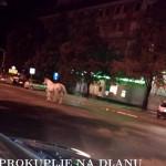 nocna_setnja_konj2.jpg
