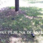uginule_ptice4.jpg