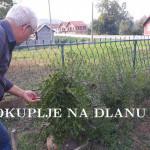 zoran_i_urma.jpg