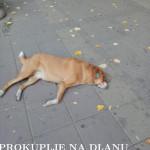 mrtav_pas2.jpg