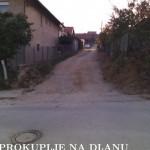 spanac_resize.jpg