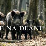 Отворена сезона лова на дивље свиње
