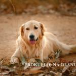 Приметили сте напуштеног пса – шта учинити?