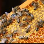 Пријава за узимљавање пчела подноси се до краја октобра